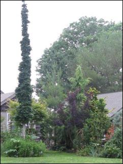TREE0690